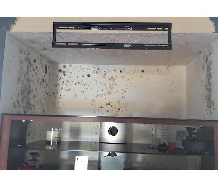 Commercial Does Your Home Has A Mold Problem?